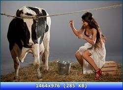http://i5.imageban.ru/out/2012/11/07/c88e63a53c5a9e3e4ba3da071a0634dd.jpg