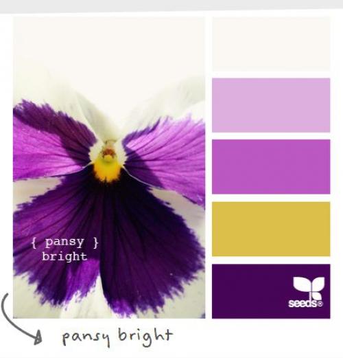 Шикарная цветовая схема может