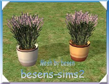 MTS_besen-587819-lavendel3.jpg