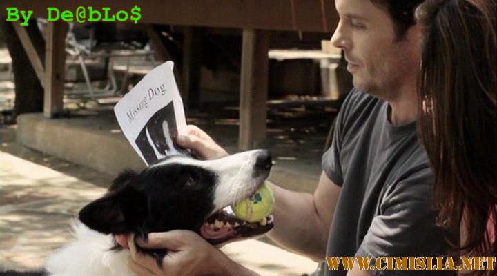Собака - ангел-хранитель / Angel Dog [2011 / DVDRip]