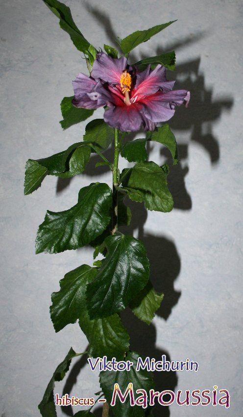 http://i5.imageban.ru/out/2013/12/11/a083e911716c0439753f3568036a0072.jpg