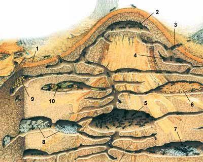 Залить алюминий в муравейник
