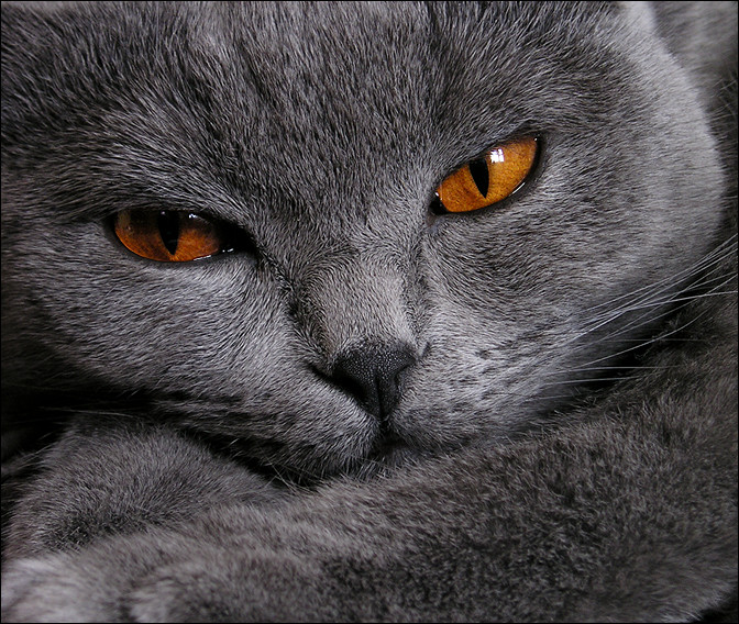 Желтые глаза 1