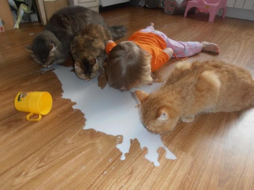 Пейте дети молоко 1