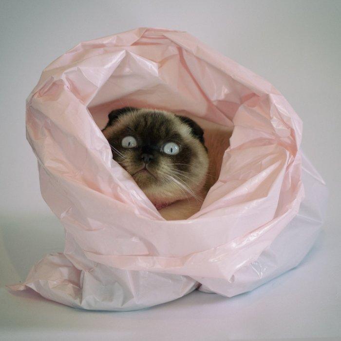Кот в пакете 1