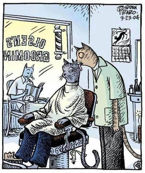 Кот парикмахер 1