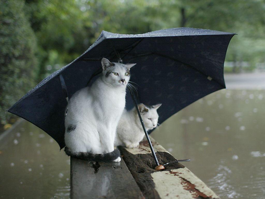 Под зонтиком 1