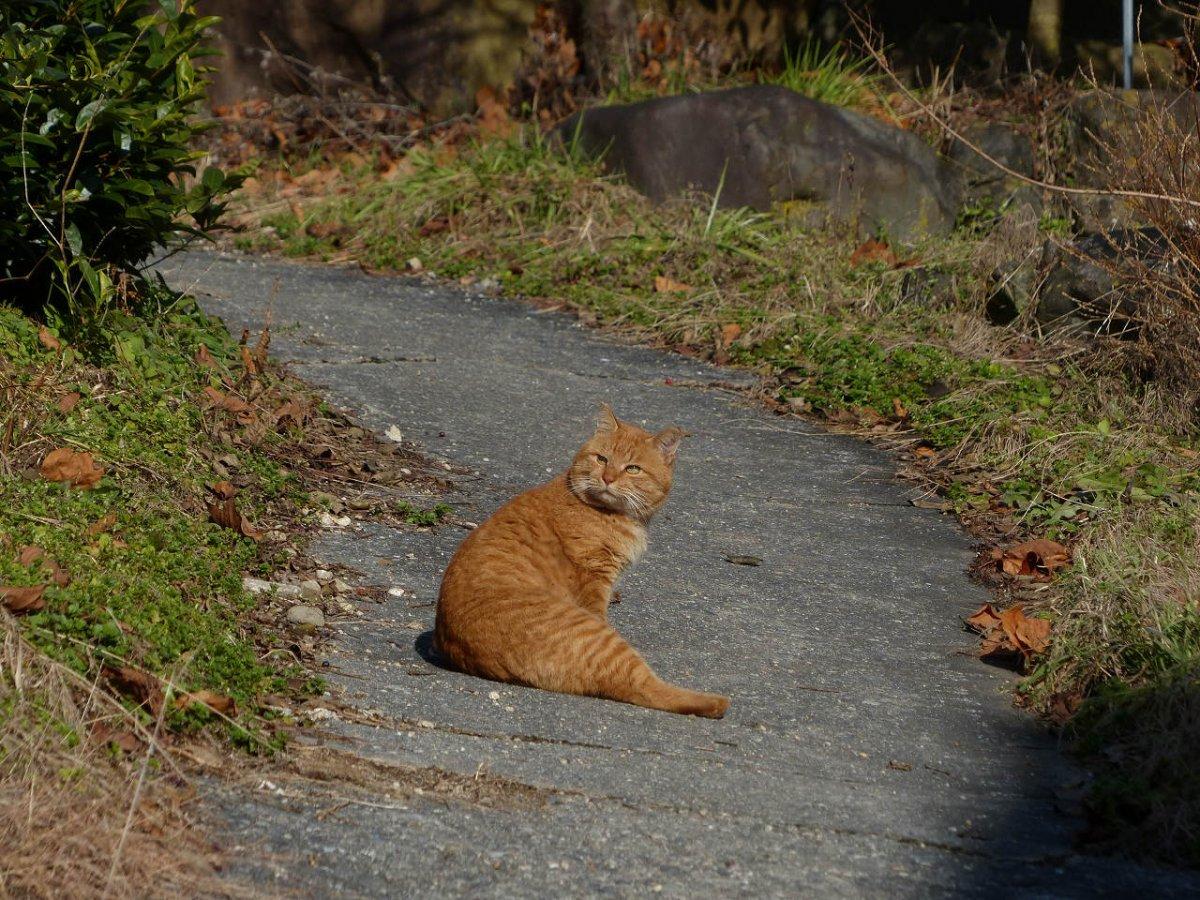 Котейка на дороге 1