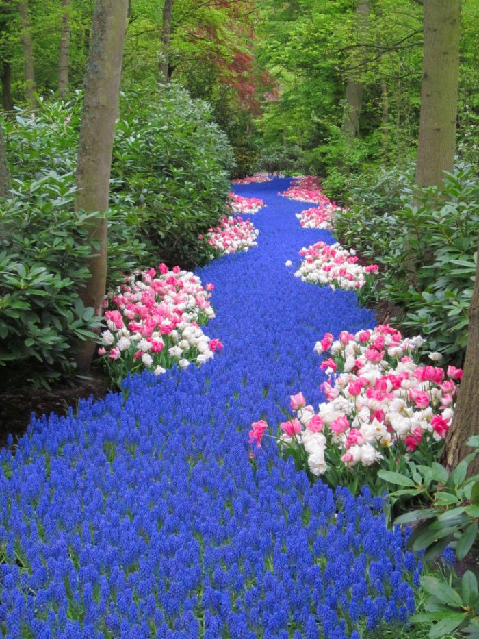 Река цветов 1