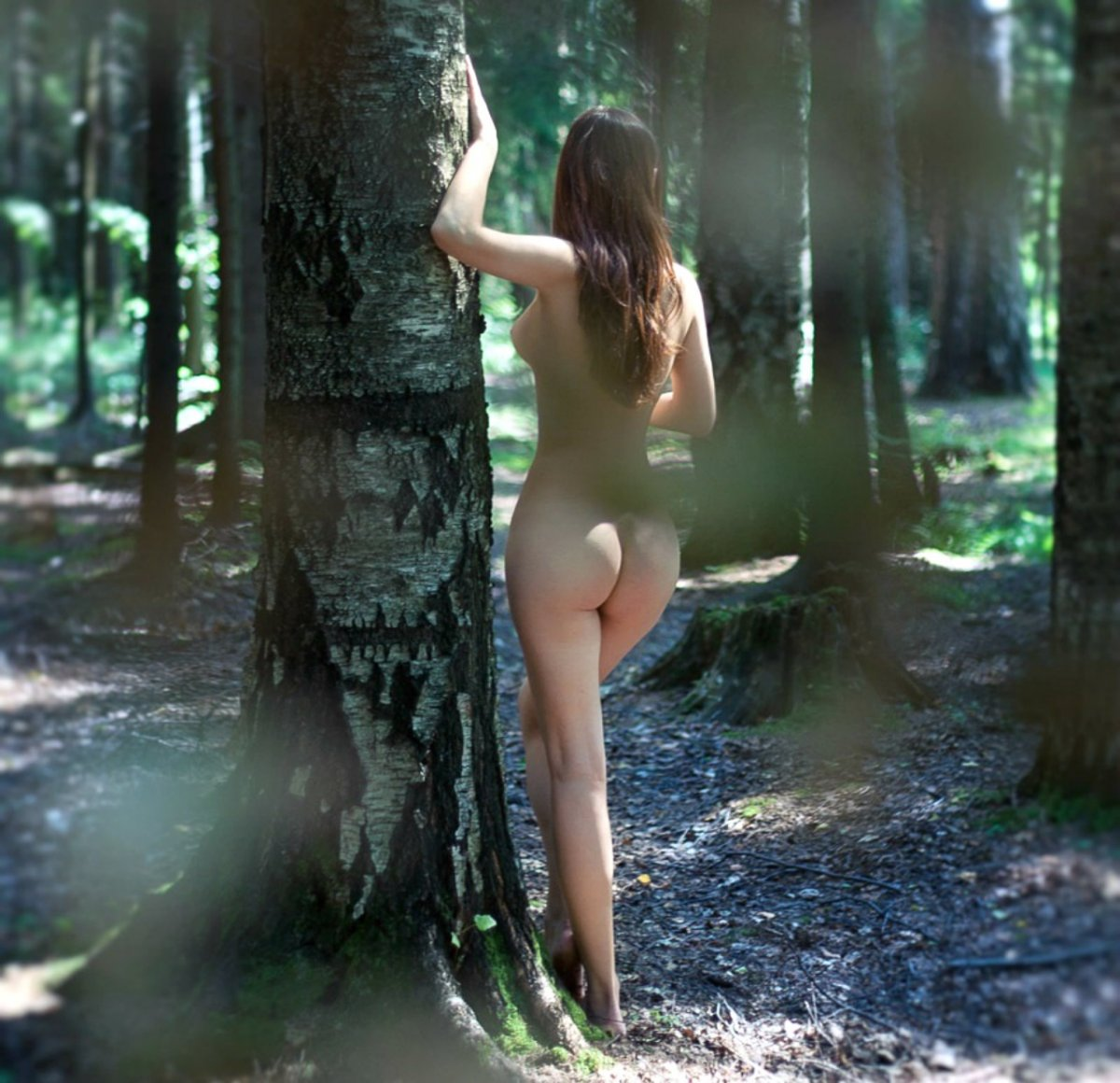 В летнем лесу 1