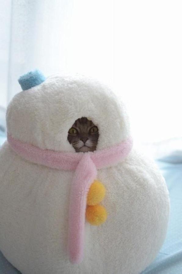 Снеговик из кота 1