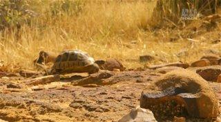 Animal Planet. Природа Ближнего Востока / Wildest Middle East [01-02] (2014) HDTVRip