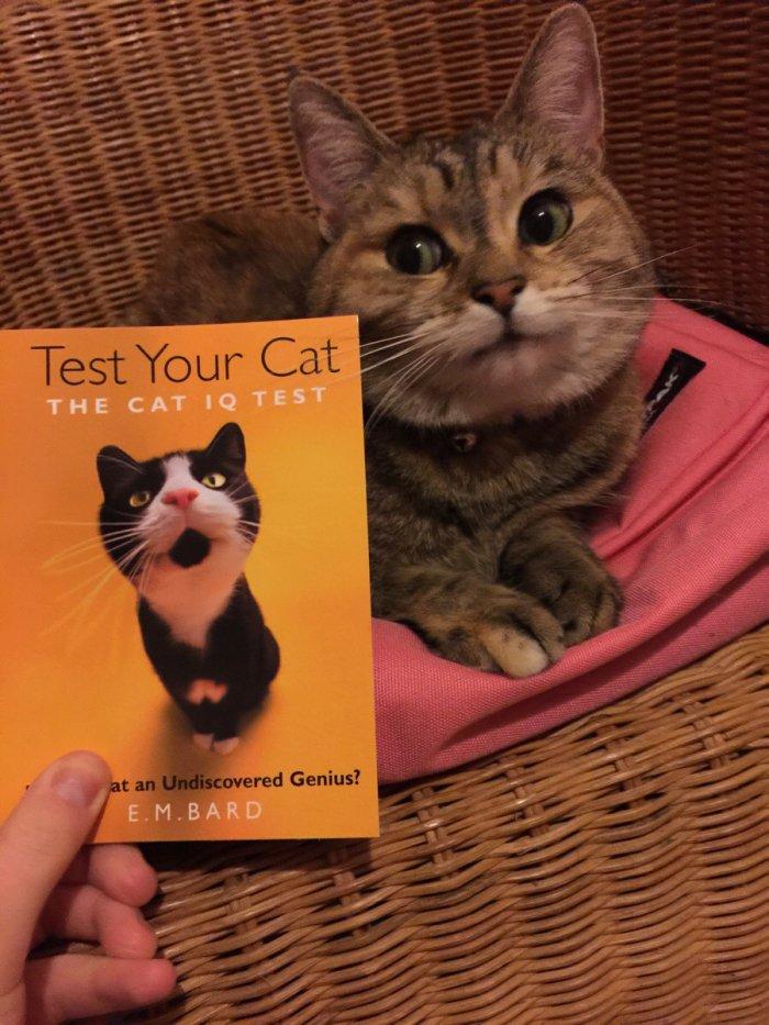 Протестируй своего кота на IQ 1