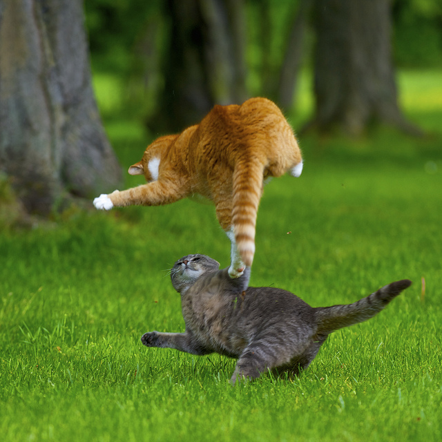 Кошачье кунг-фу 1