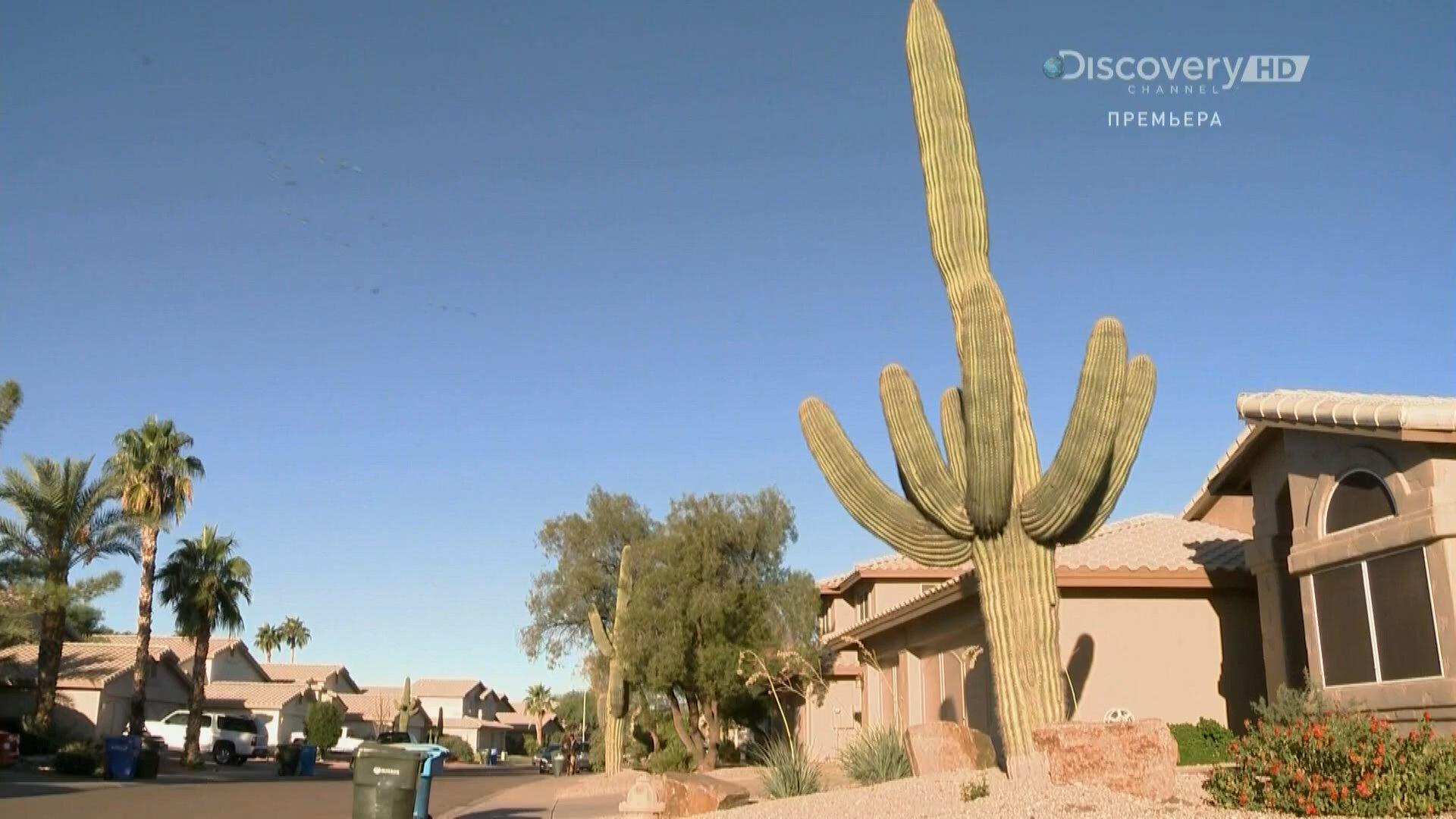 Discovery. Битва за недвижимость / Property Wars (2 сезон: 1-24 серии из 24) (2013) HDTV 1080i