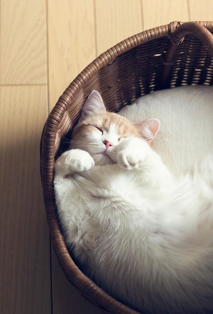 Котейка в корзинке