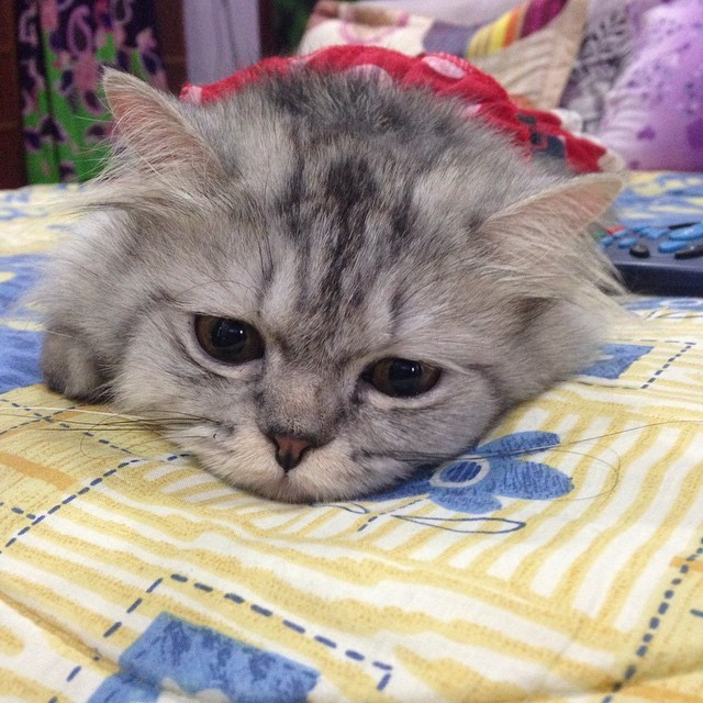 Котейке скучно