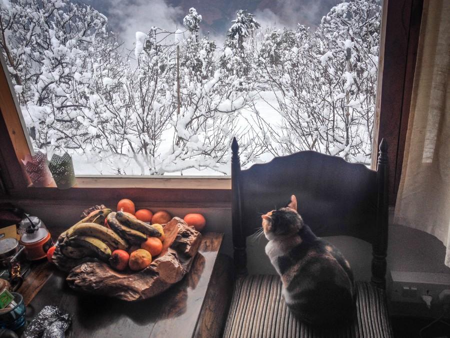 Мороз за окном