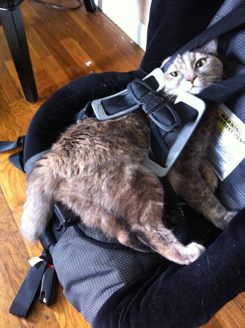 Ловушка для кошек