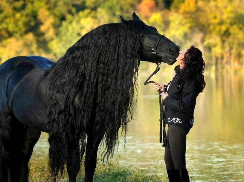 Черный черный конь