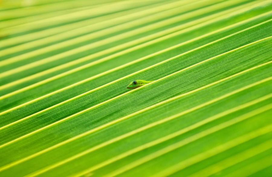 Средь пальмовой листвы