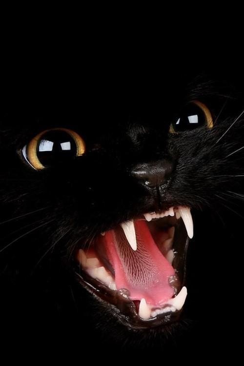 Черный кот на черном фоне