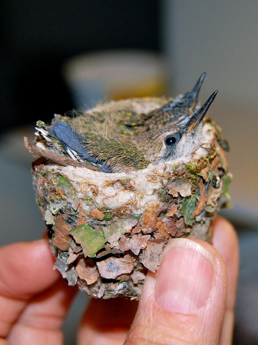 Миниатюрное гнездо