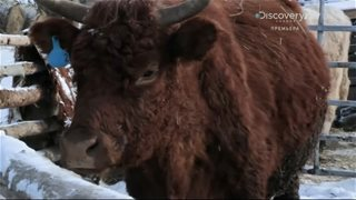Discovery. Аляска: последний рубеж / Alaska: The Last Frontier [3 сезон] (2013) HDTVRip 720р от GeneralFilm