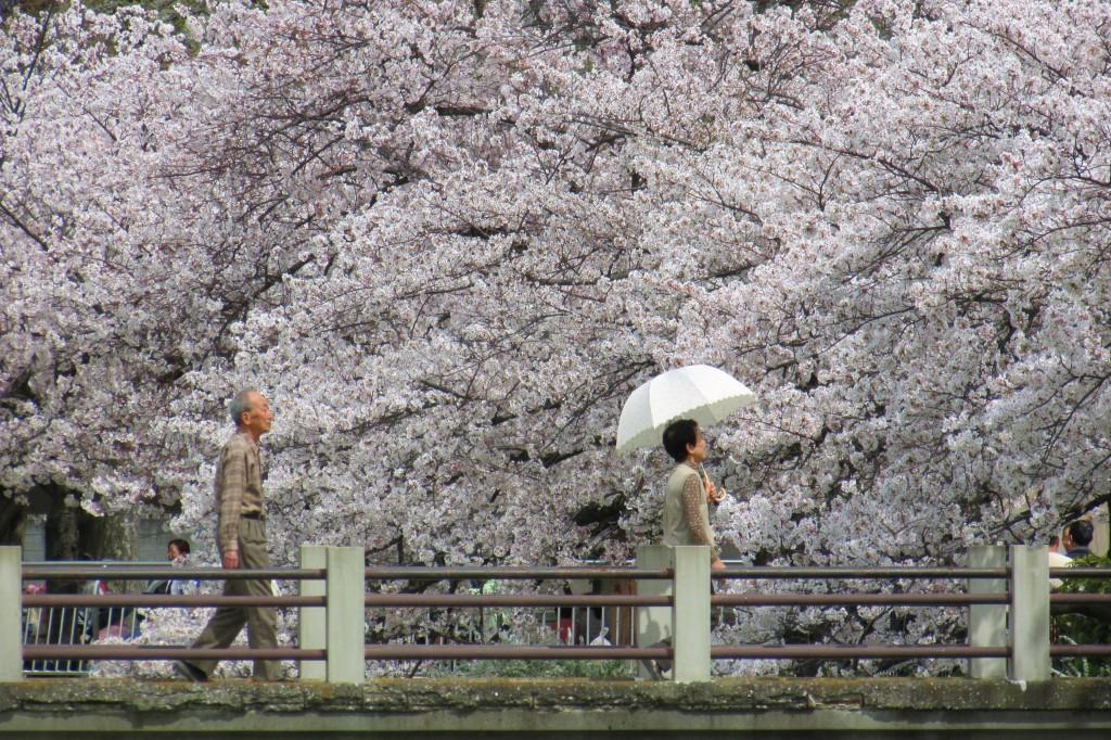 Ветка, цветение, цветы, весна, лепестки 1920 x 1080