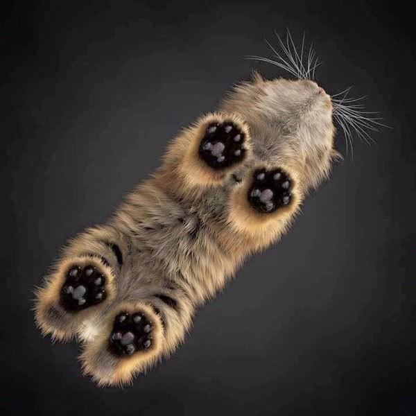 Котейка, вид снизу
