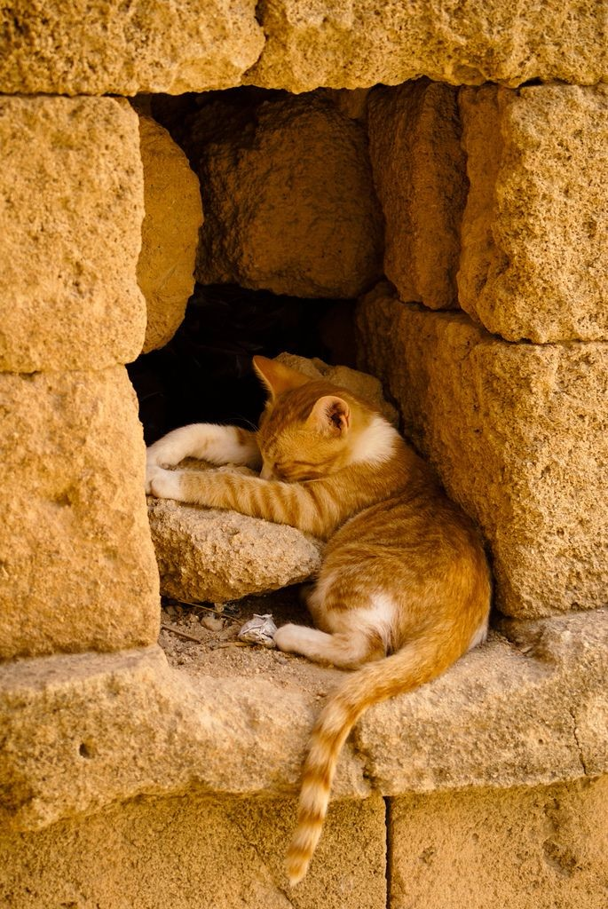 Котенок в стене