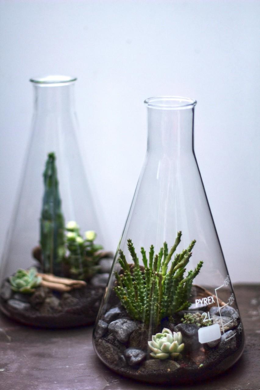 Растения в пробирках