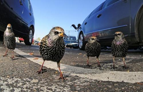 Победители британского конкурса фотографий дикой природы [Фоторепортаж]