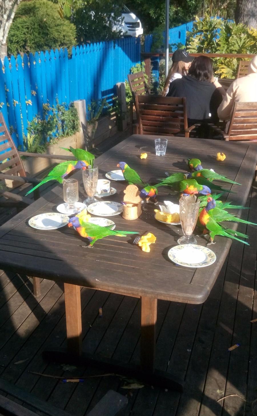 Австралийские голуби