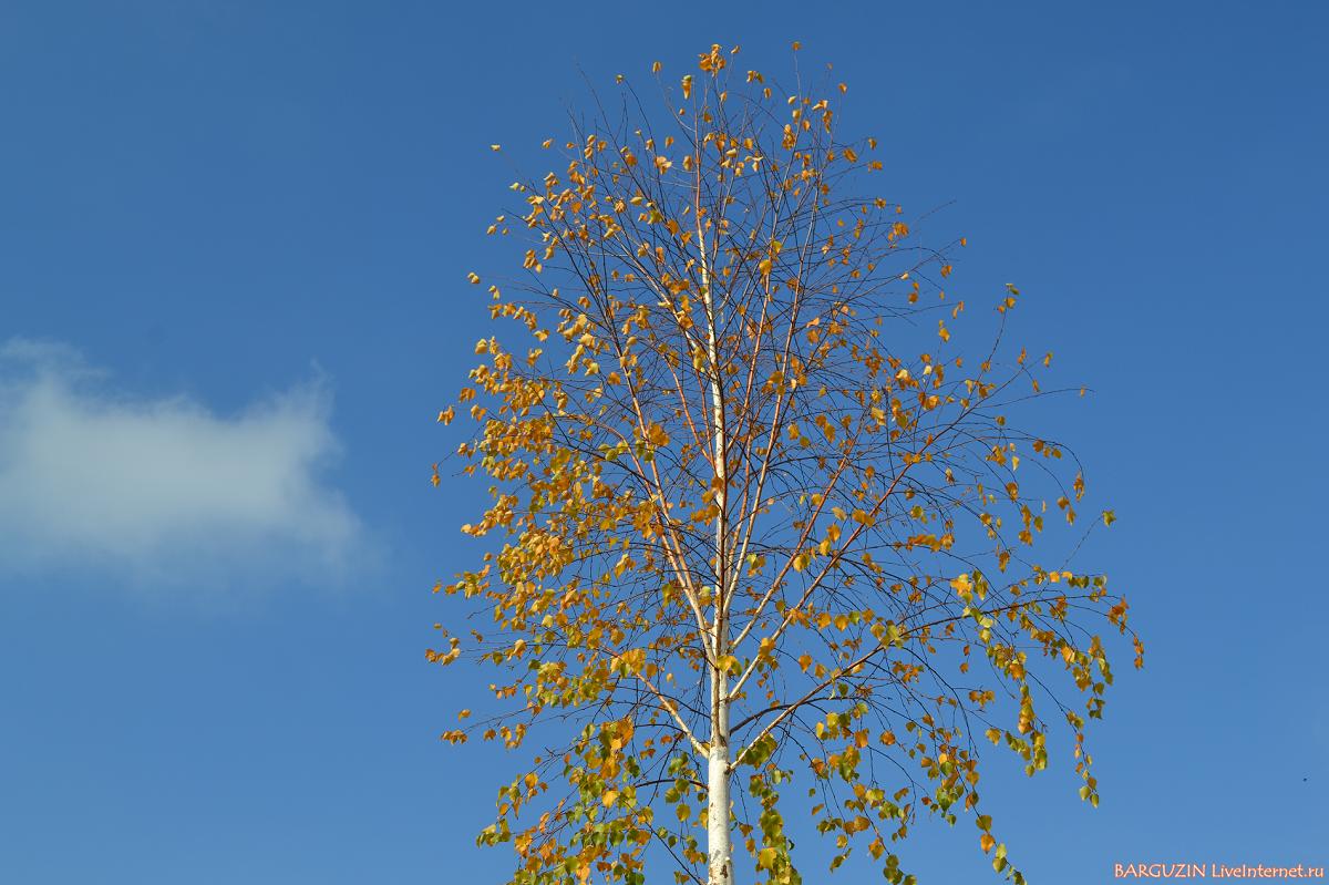 Осень радует ласковой погодой