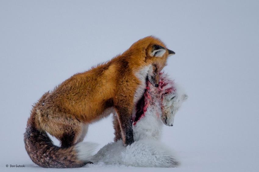 Лучшие фото природы 2015 года от Photographe Wildlife