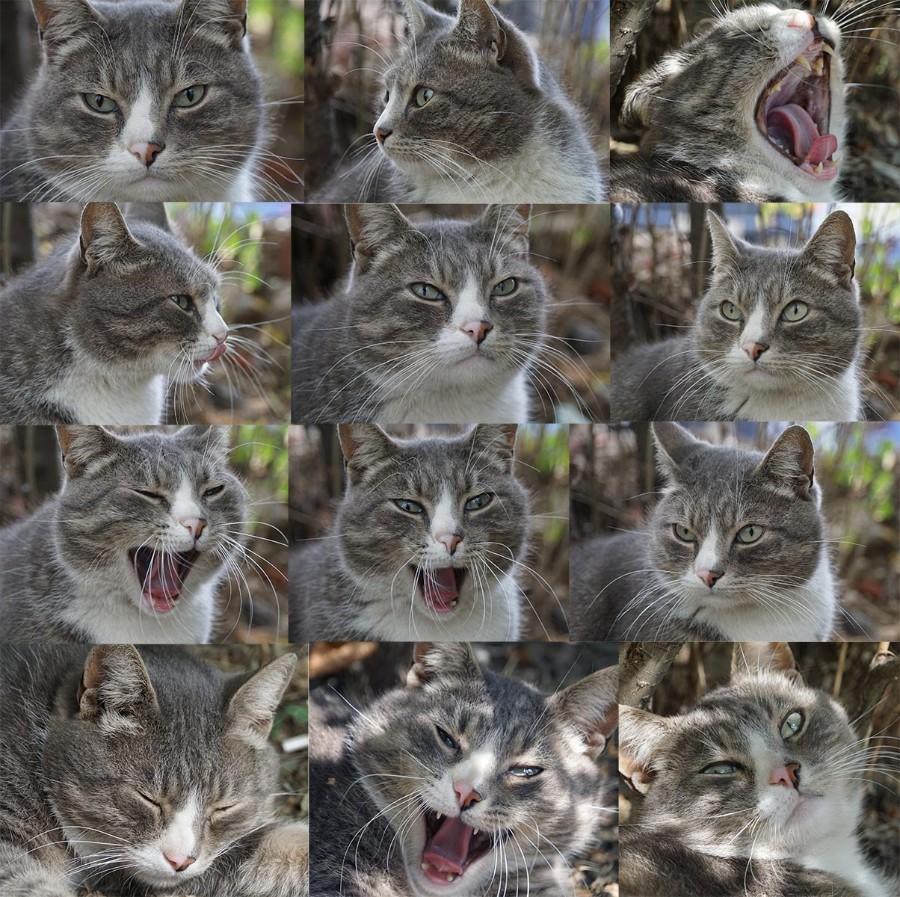 Эмоции котейки