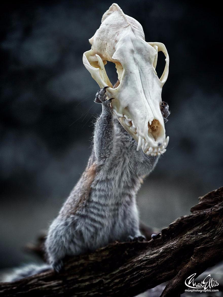 Беличья маска
