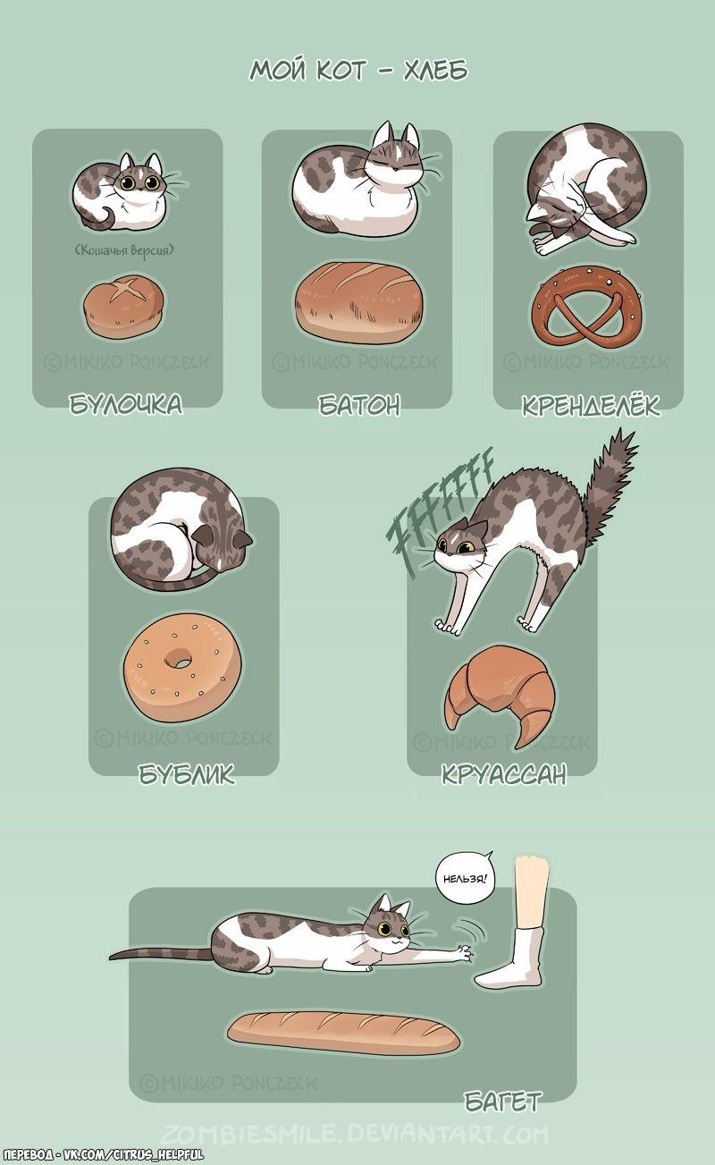 Кот - хлеб