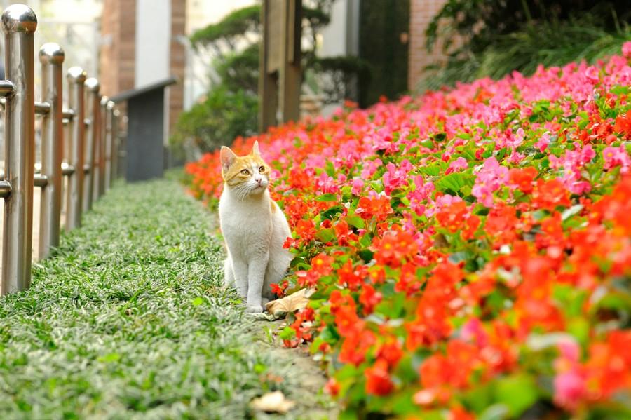 Котейка в цветах