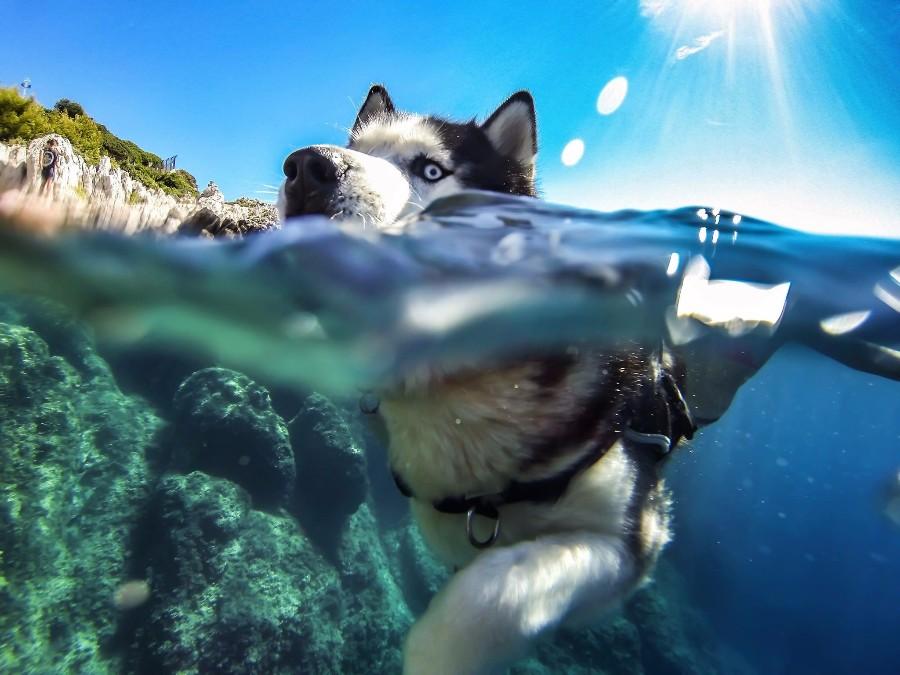 Хаски в воде
