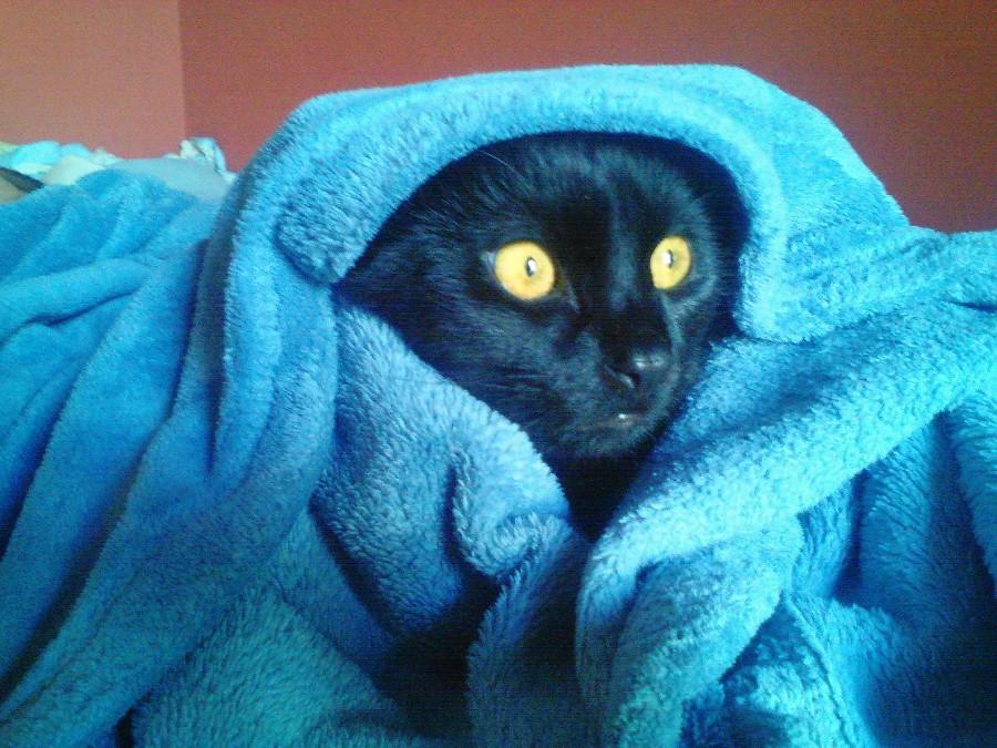 Котейка в халатике