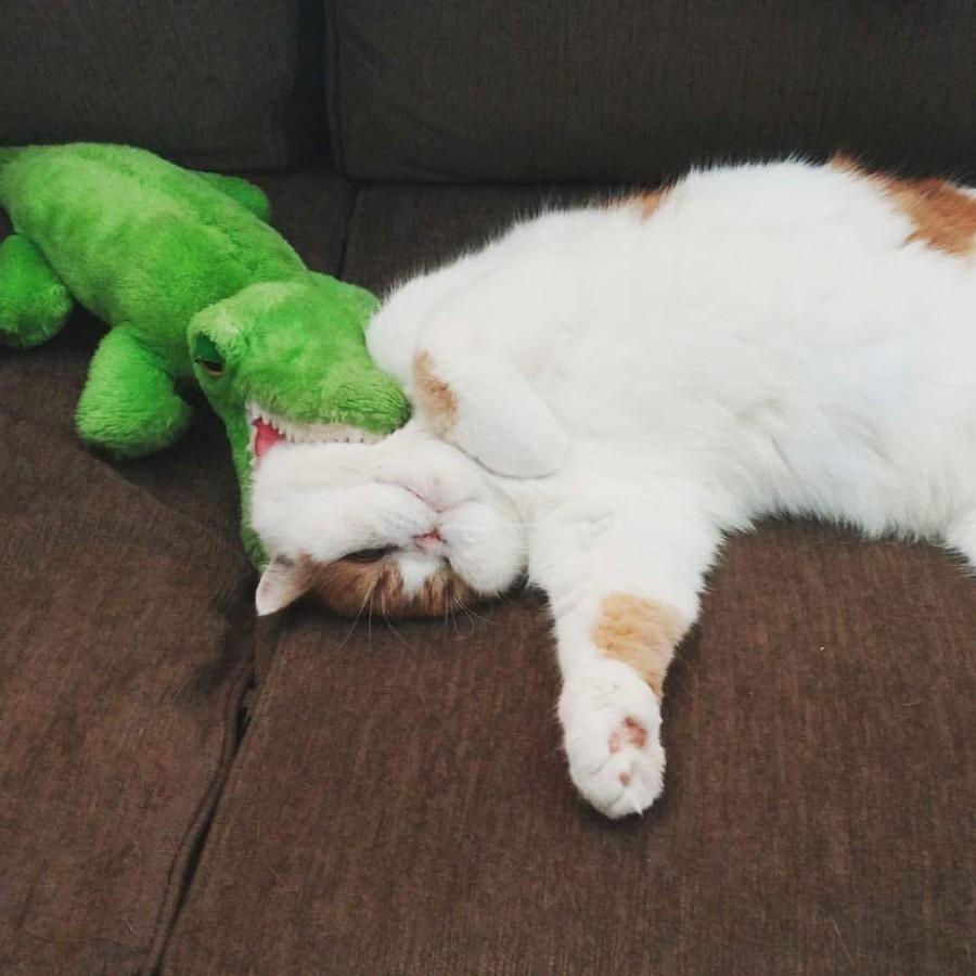 Крокодил грызет котейку