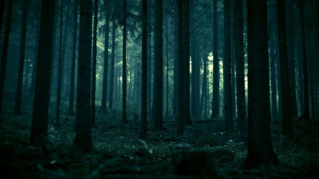 dark-forest.jpg