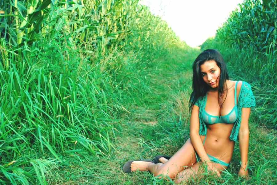 На кукурузном поле