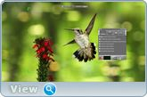 ZD Soft Screen Recorder 10.1 RePack (& Portable) by KpoJIuK (x86-x64) (14.10.2016) Multi/Rus