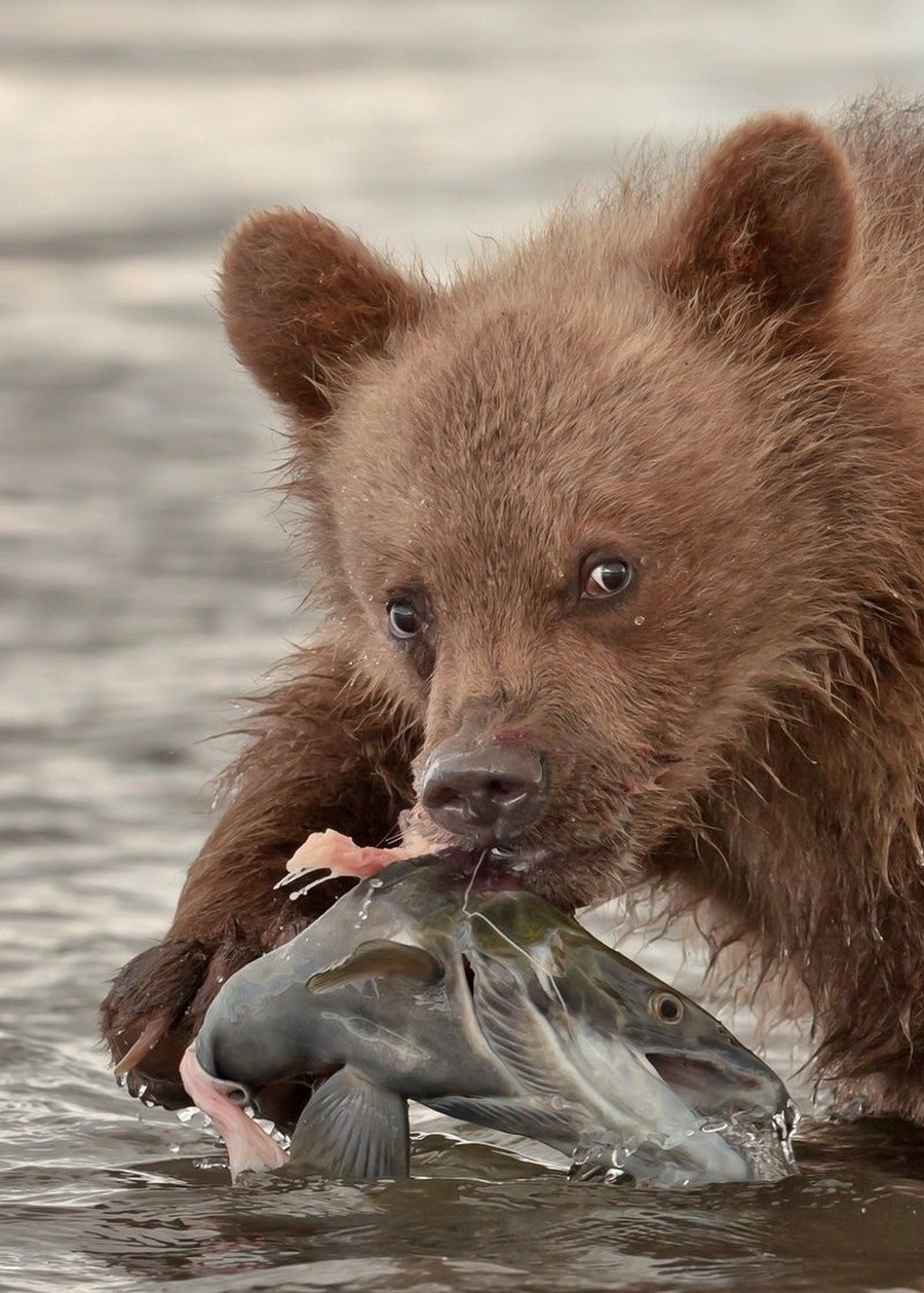 Рыбалка по-медвежьи