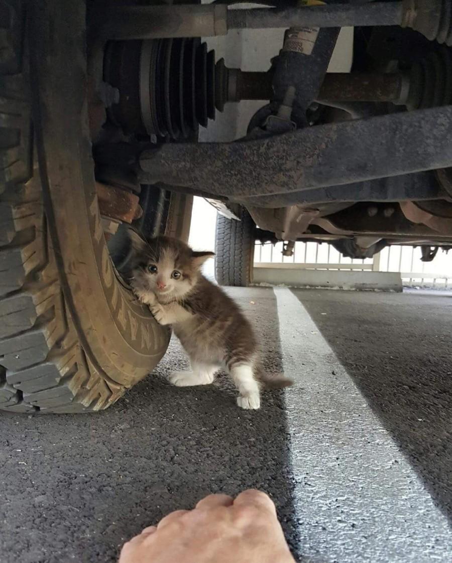 Напуганный котенок