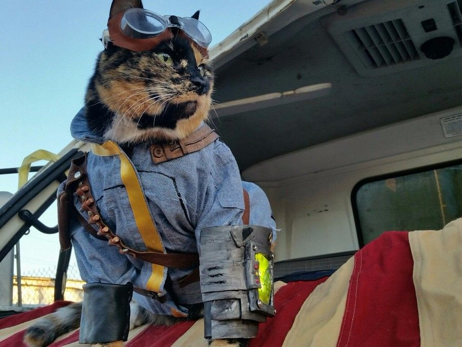 Фоллаут кот