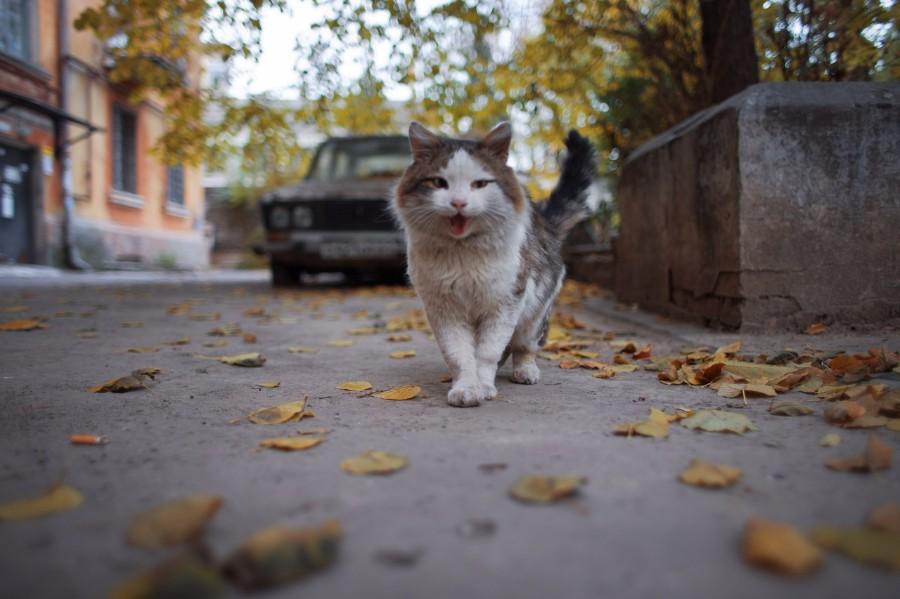 Дворовый котейка